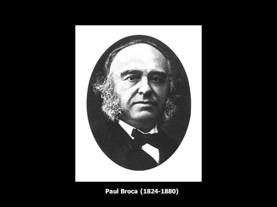 Localização das funções cerebrais histórico Jean Pierre Marie Flourens (1820), fisiologista francês, realizando experimentos em animais, não encontrou