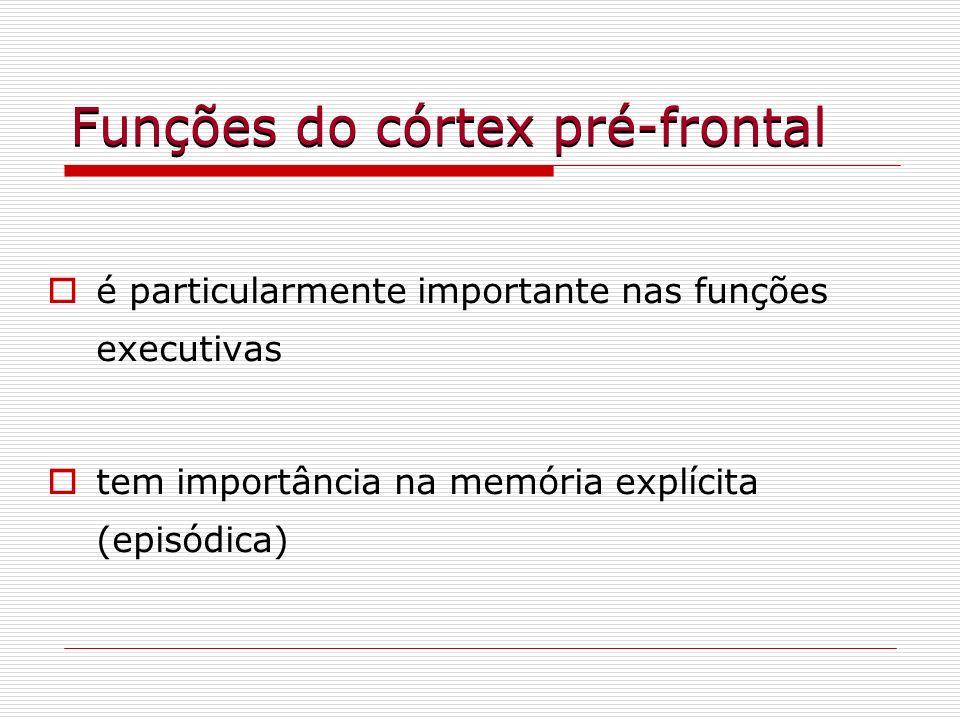 Funções do córtex pré-frontal é particularmente importante nas funções executivas tem importância na memória explícita (episódica)