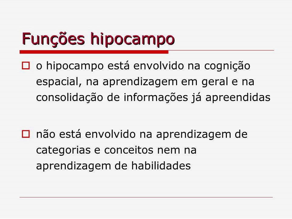 Funções hipocampo o hipocampo está envolvido na cognição espacial, na aprendizagem em geral e na consolidação de informações já apreendidas não está e