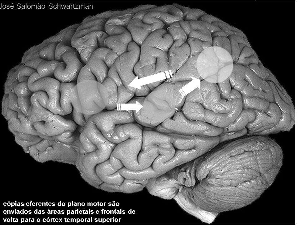 cópias eferentes do plano motor são enviados das áreas parietais e frontais de volta para o córtex temporal superior José Salomão Schwartzman