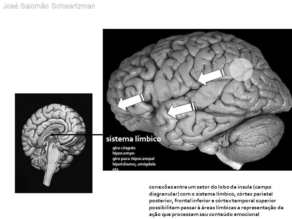 conexões entre um setor do lobo da insula (campo disgranular) com o sistema límbico, córtex parietal posterior, frontal inferior e córtex temporal sup