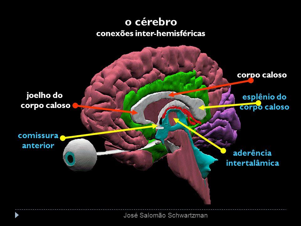 o cérebro conexões inter-hemisféricas corpo caloso joelho do corpo caloso esplênio do corpo caloso aderência intertalâmica comissura anterior José Sal