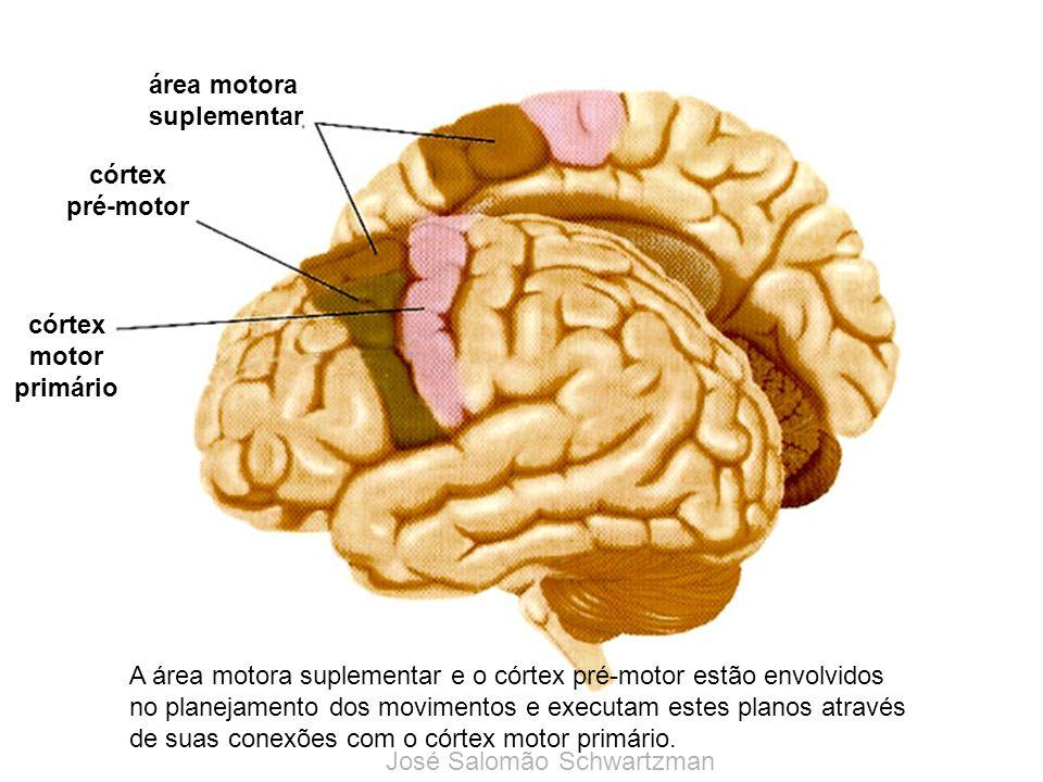 área motora suplementar córtex pré-motor córtex motor primário A área motora suplementar e o córtex pré-motor estão envolvidos no planejamento dos mov