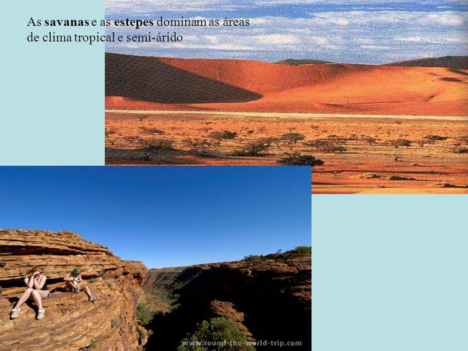 As savanas e as estepes dominam as áreas de clima tropical e semi-árido