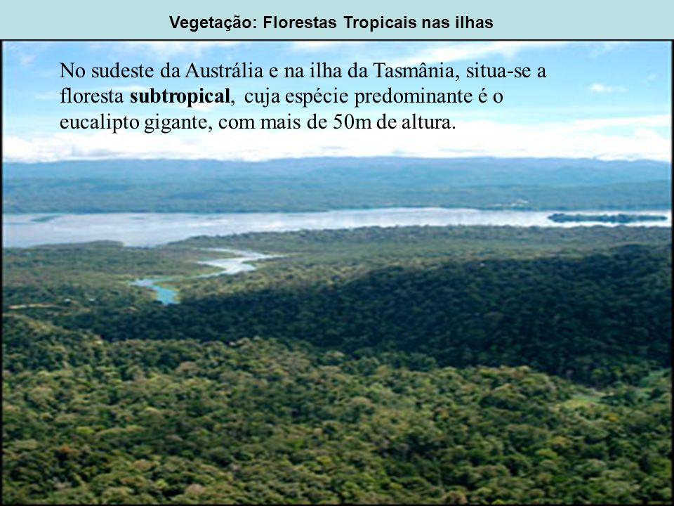 Vegetação: Florestas Tropicais nas ilhas No sudeste da Austrália e na ilha da Tasmânia, situa-se a floresta subtropical, cuja espécie predominante é o