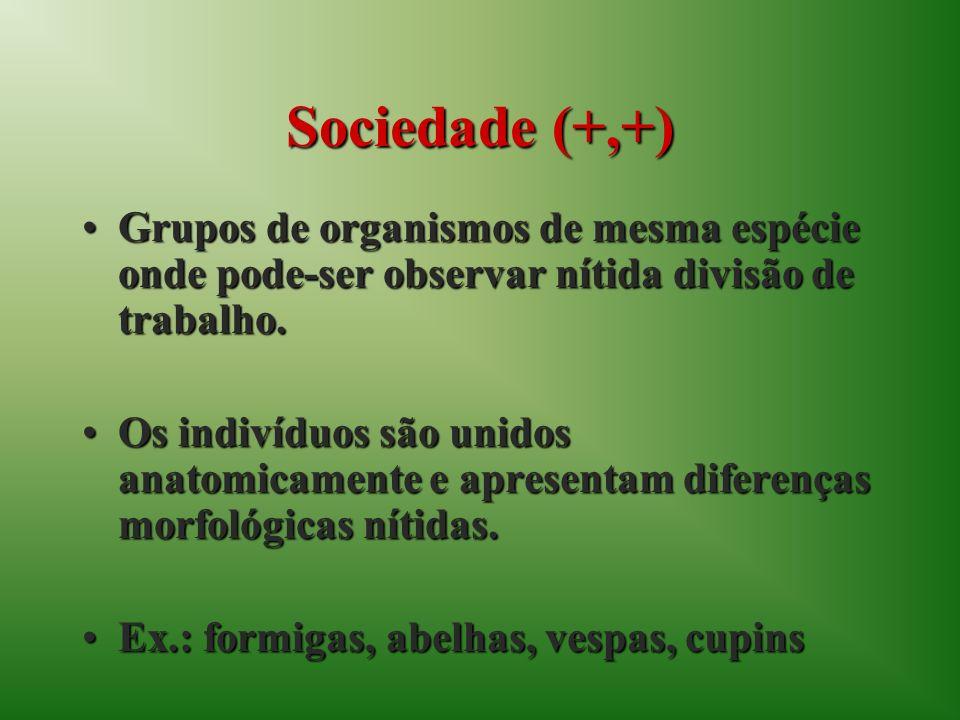 Sociedade (+,+) Grupos de organismos de mesma espécie onde pode-ser observar nítida divisão de trabalho.Grupos de organismos de mesma espécie onde pod