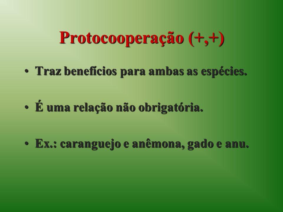 Protocooperação (+,+) Traz benefícios para ambas as espécies.Traz benefícios para ambas as espécies. É uma relação não obrigatória.É uma relação não o