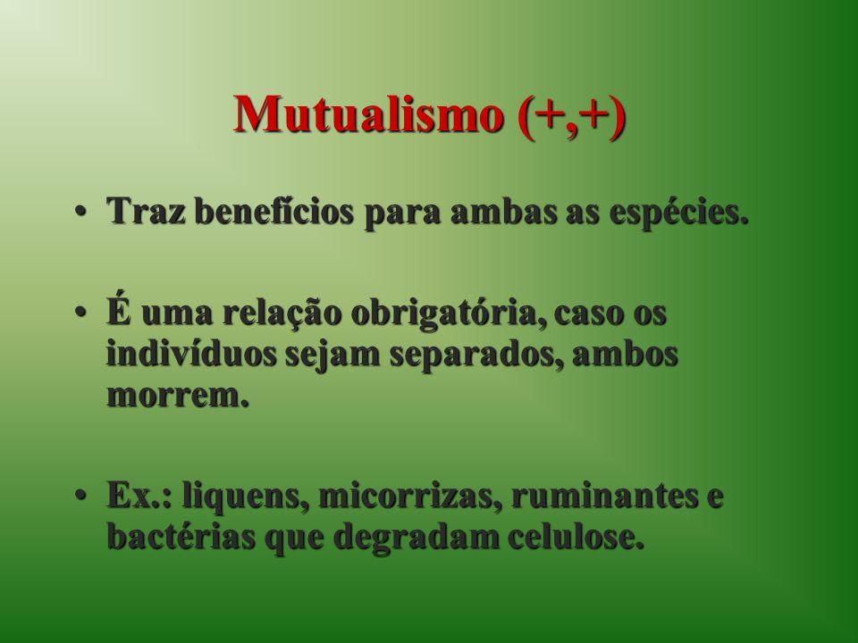 Mutualismo (+,+) Traz benefícios para ambas as espécies.Traz benefícios para ambas as espécies. É uma relação obrigatória, caso os indivíduos sejam se
