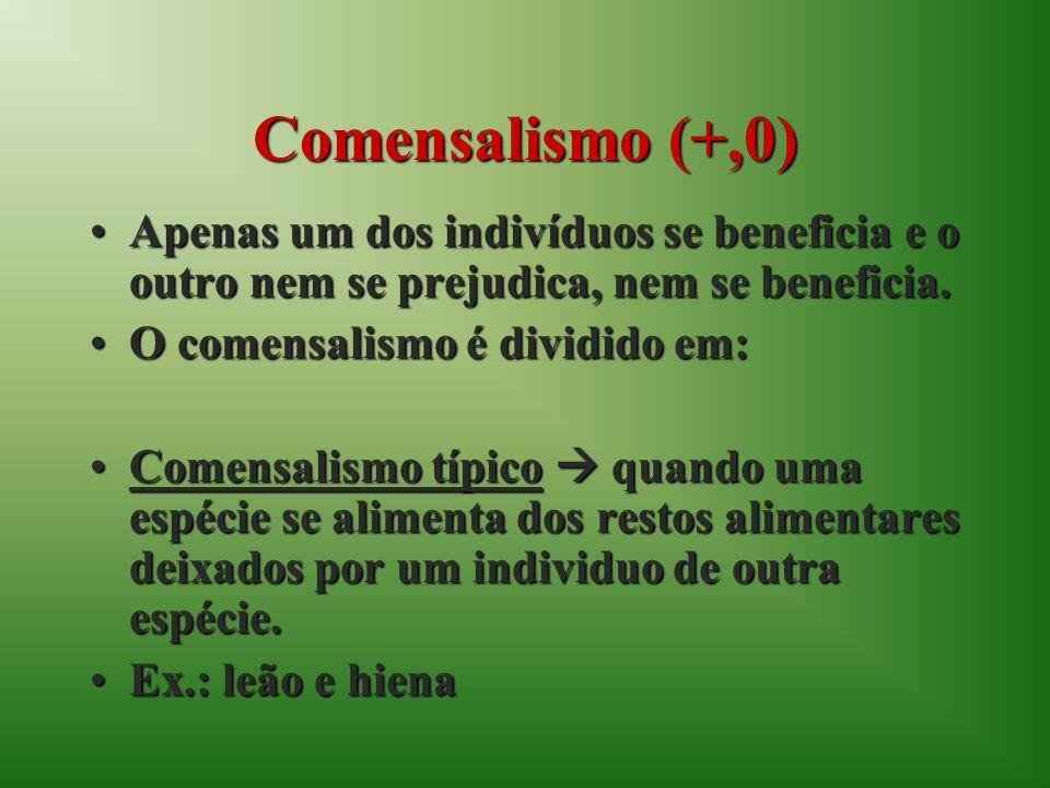 Comensalismo (+,0) Apenas um dos indivíduos se beneficia e o outro nem se prejudica, nem se beneficia.Apenas um dos indivíduos se beneficia e o outro nem se prejudica, nem se beneficia.