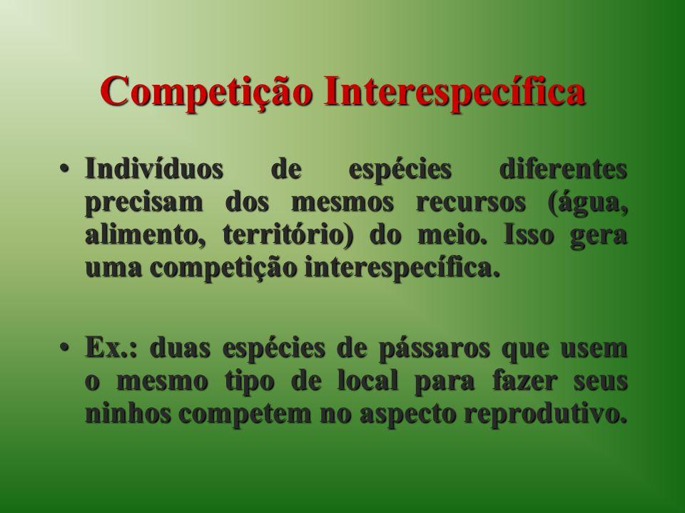 Competição Interespecífica Indivíduos de espécies diferentes precisam dos mesmos recursos (água, alimento, território) do meio.