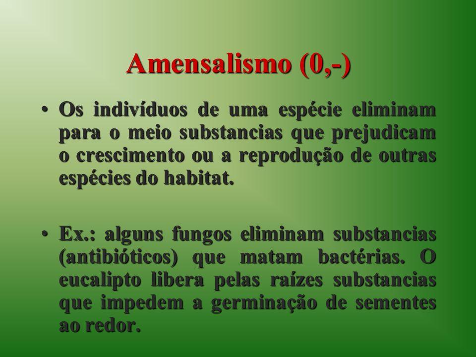 Amensalismo (0,-) Os indivíduos de uma espécie eliminam para o meio substancias que prejudicam o crescimento ou a reprodução de outras espécies do hab