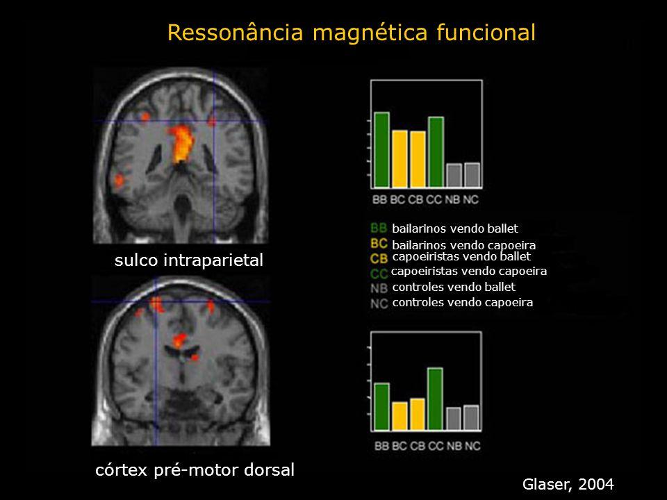 Ressonância magnética funcional sulco intraparietal córtex pré-motor dorsal bailarinos vendo ballet bailarinos vendo capoeira capoeiristas vendo balle