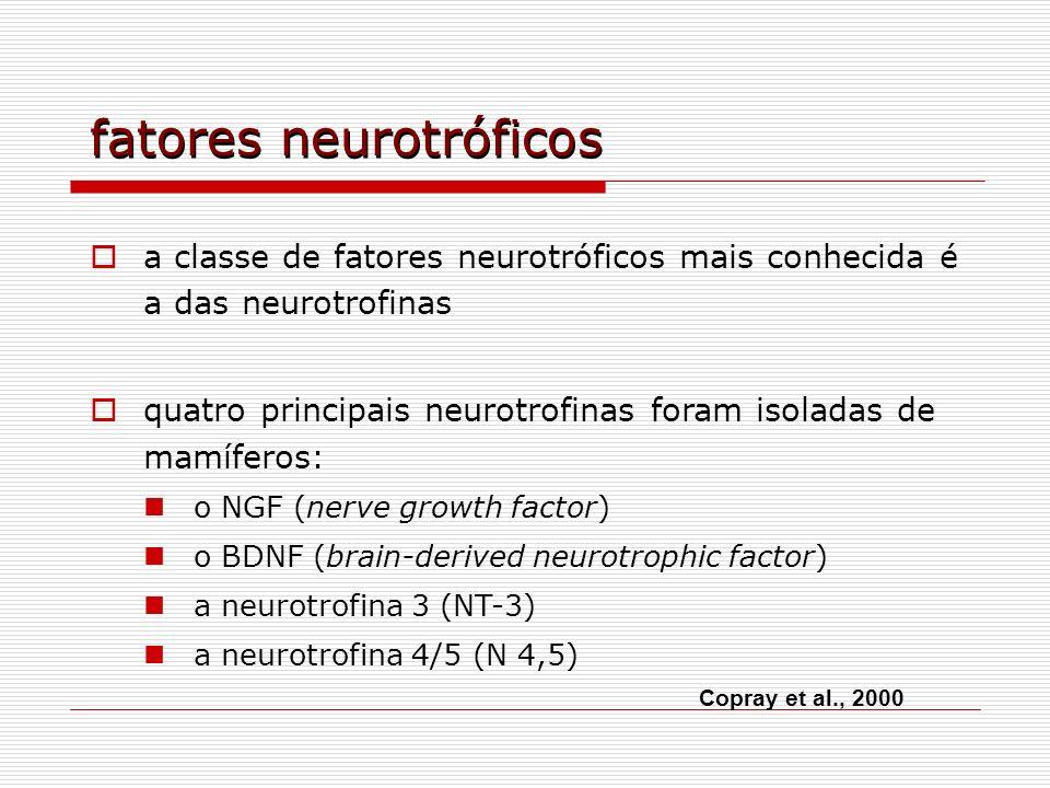fatores neurotróficos a classe de fatores neurotróficos mais conhecida é a das neurotrofinas quatro principais neurotrofinas foram isoladas de mamífer