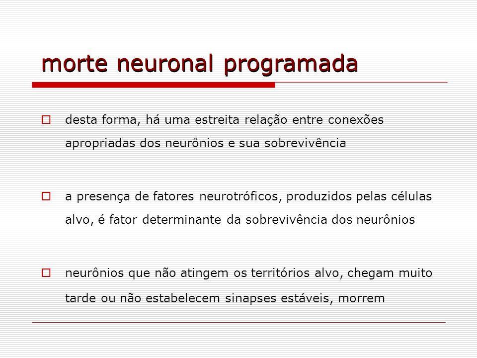 morte neuronal programada desta forma, há uma estreita relação entre conexões apropriadas dos neurônios e sua sobrevivência a presença de fatores neur