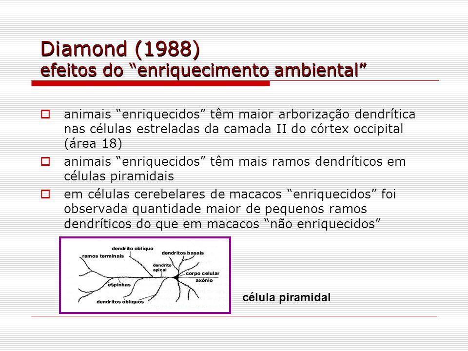 Diamond (1988) efeitos do enriquecimento ambiental animais enriquecidos têm maior arborização dendrítica nas células estreladas da camada II do córtex