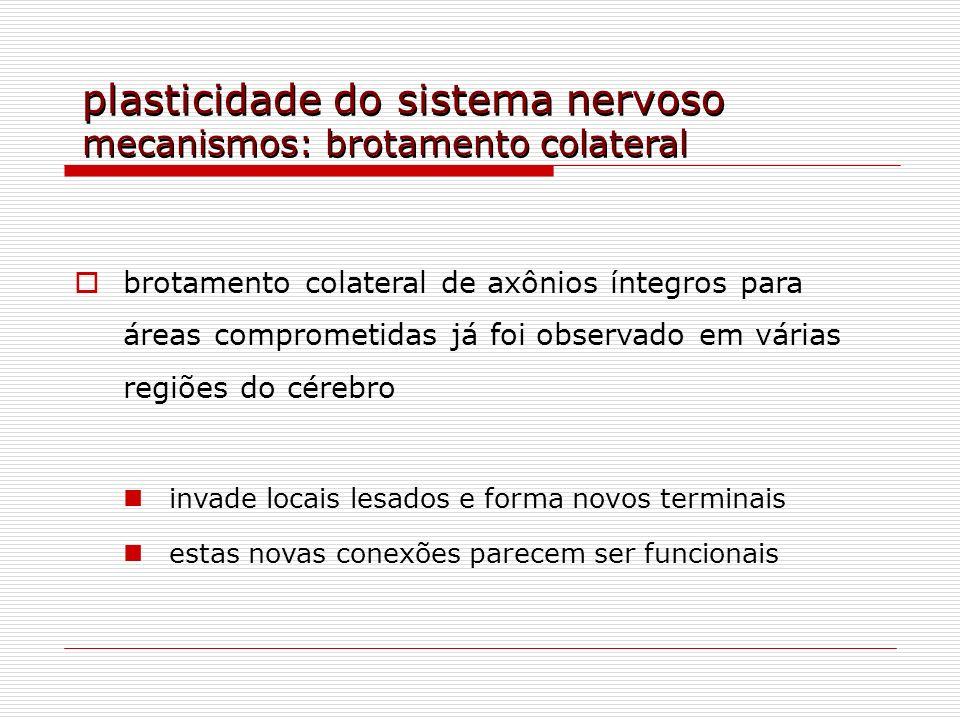 plasticidade do sistema nervoso mecanismos: brotamento colateral brotamento colateral de axônios íntegros para áreas comprometidas já foi observado em