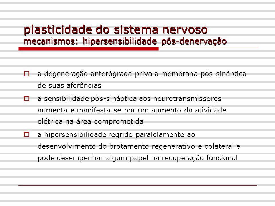 plasticidade do sistema nervoso mecanismos: hipersensibilidade pós-denervação a degeneração anterógrada priva a membrana pós-sináptica de suas aferênc