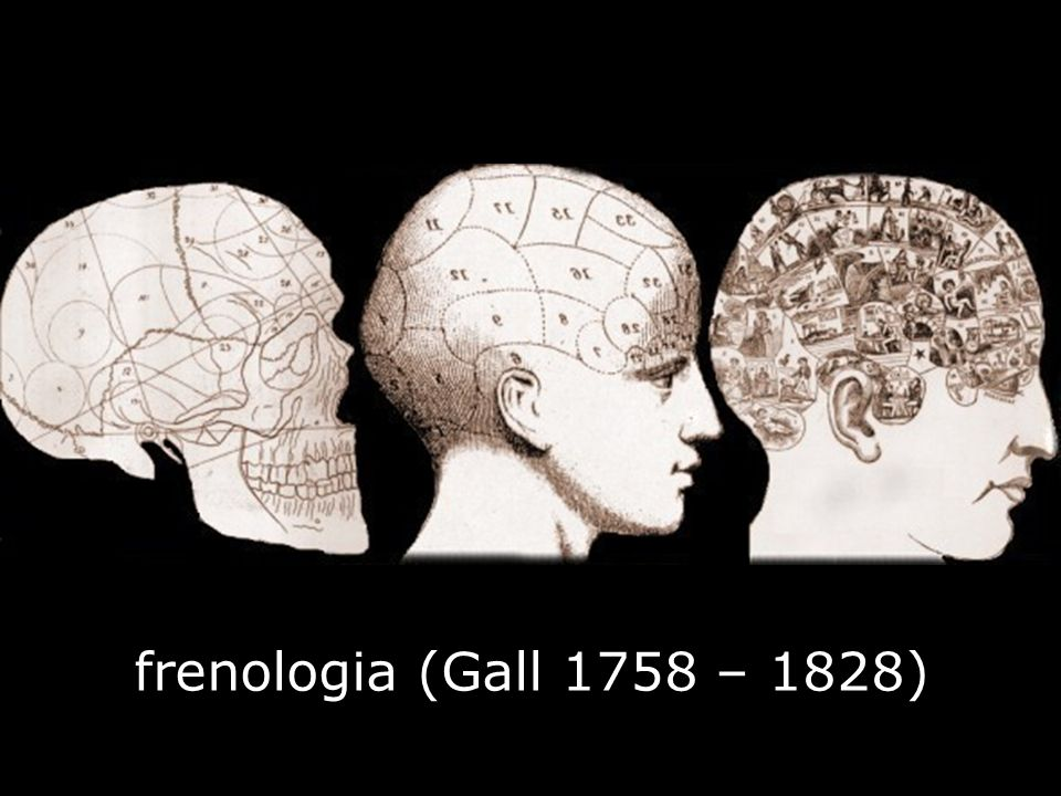frenologia (Gall 1758 – 1828)