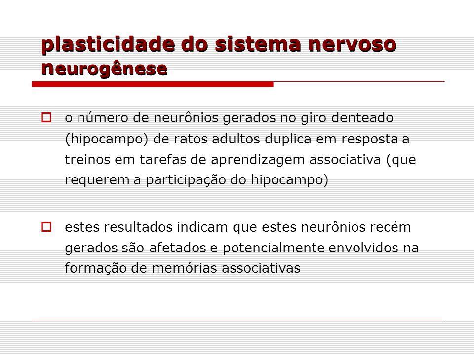plasticidade do sistema nervoso n eurogênese o número de neurônios gerados no giro denteado (hipocampo) de ratos adultos duplica em resposta a treinos