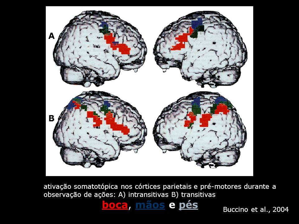 A B ativação somatotópica nos córtices parietais e pré-motores durante a observação de ações: A) intransitivas B) transitivas boca, mãos e pés Buccino