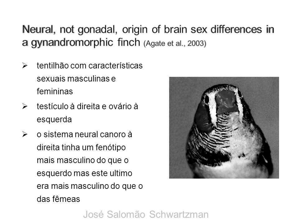 tentilhão com características sexuais masculinas e femininas testículo à direita e ovário à esquerda o sistema neural canoro à direita tinha um fenóti
