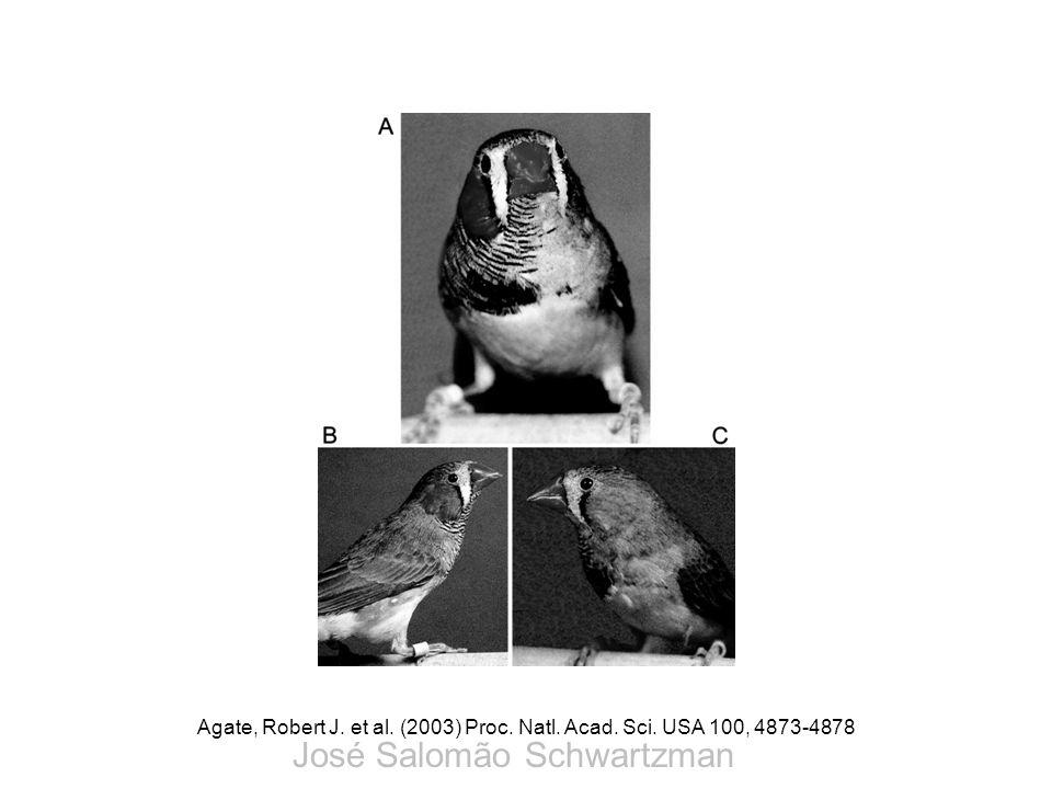 Agate, Robert J. et al. (2003) Proc. Natl. Acad. Sci. USA 100, 4873-4878 José Salomão Schwartzman