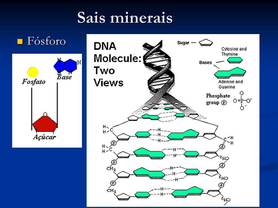 Sais minerais Fósforo Fósforo
