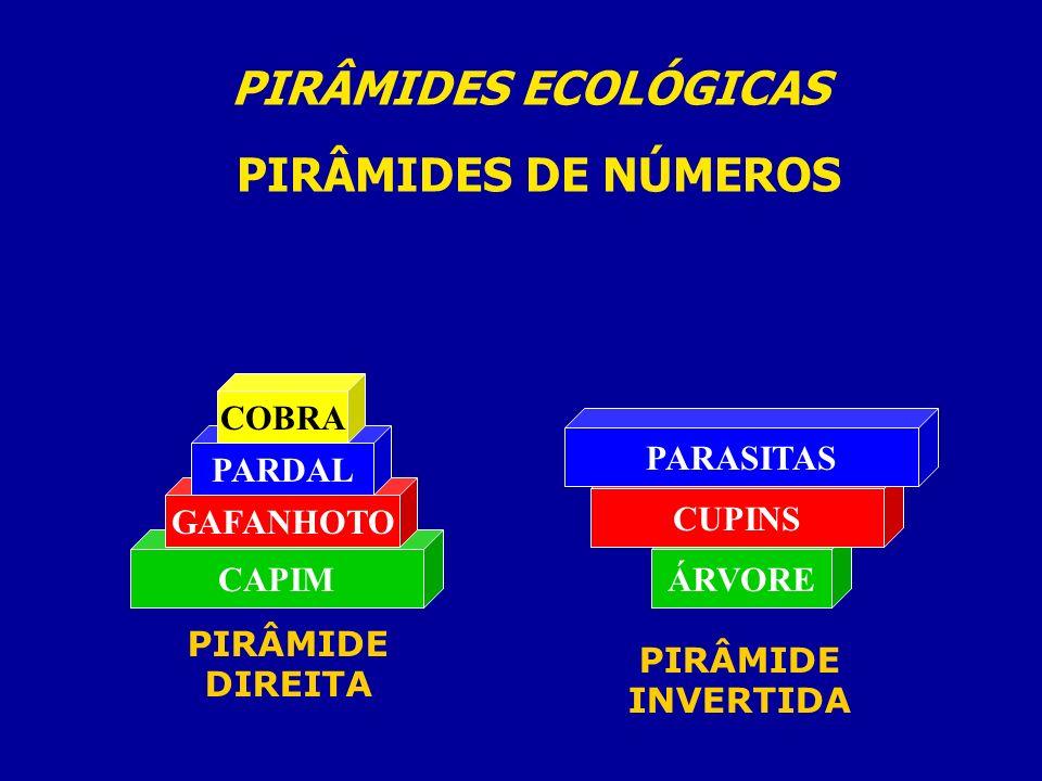 PIRÂMIDES ECOLÓGICAS PIRÂMIDES DE NÚMEROS CAPIM GAFANHOTO PARDAL COBRA PIRÂMIDE DIREITA ÁRVORE CUPINS PARASITAS PIRÂMIDE INVERTIDA