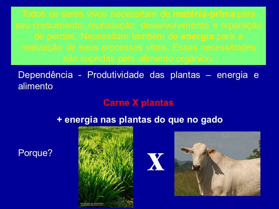 Dependência - Produtividade das plantas – energia e alimento Carne X plantas + energia nas plantas do que no gado Porque? Todos os seres vivos necessi