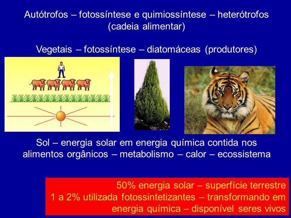 Autótrofos – fotossíntese e quimiossíntese – heterótrofos (cadeia alimentar) Vegetais – fotossíntese – diatomáceas (produtores) Sol – energia solar em