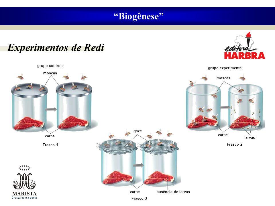 Experimentos de Redi Biogênese gaze ausência de larvas Frasco 3 carne grupo experimental moscas larvas Frasco 2 carne grupo controle moscas carne Fras