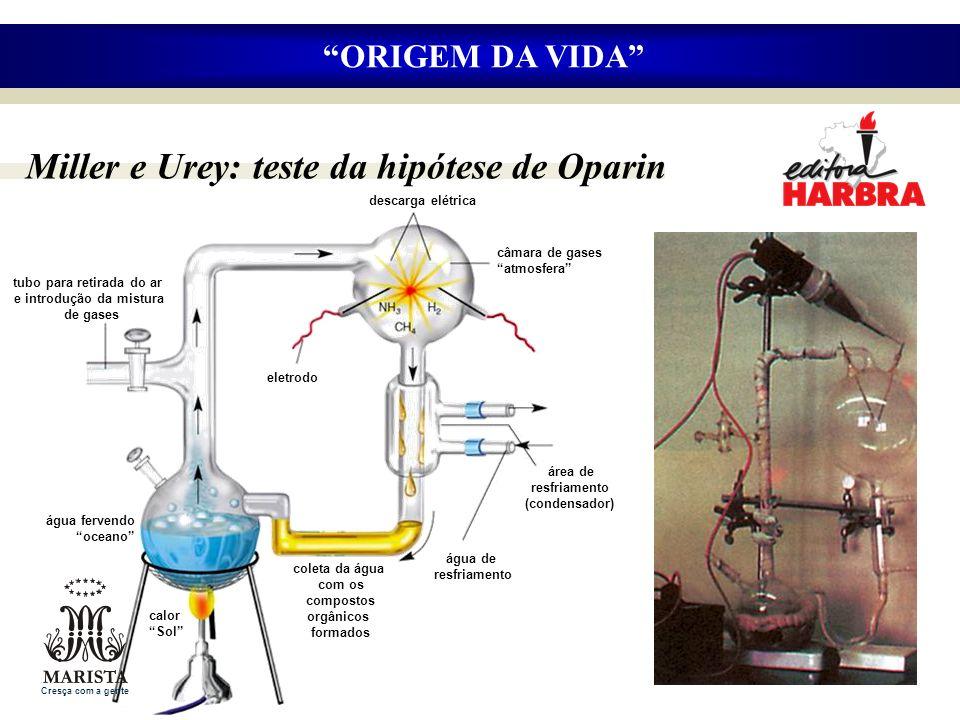 Miller e Urey: teste da hipótese de Oparin ORIGEM DA VIDA água fervendo oceano calor Sol coleta da água com os compostos orgânicos formados eletrodo á