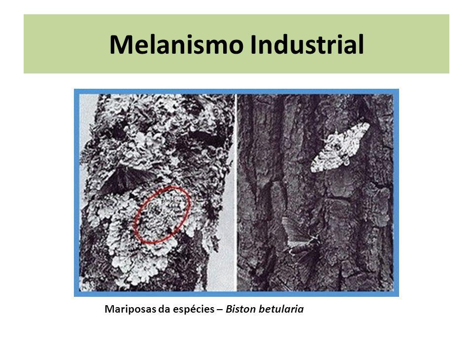 Melanismo Industrial Mariposas da espécies – Biston betularia
