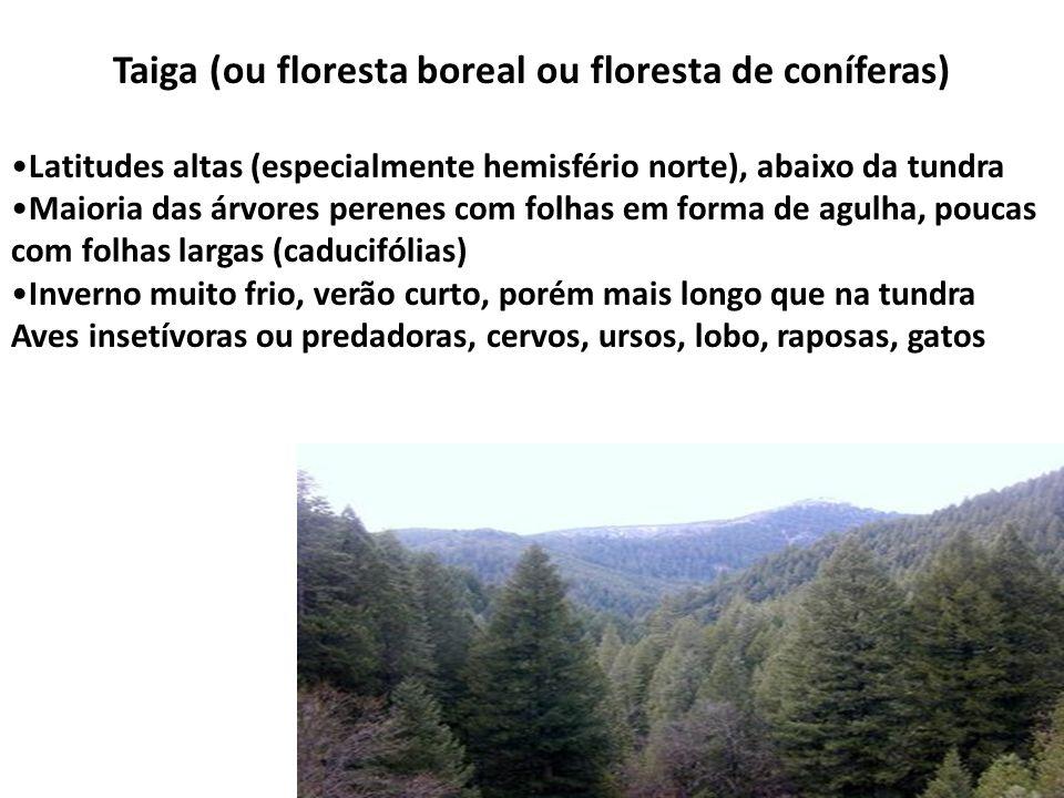 Taiga (ou floresta boreal ou floresta de coníferas) Latitudes altas (especialmente hemisfério norte), abaixo da tundra Maioria das árvores perenes com
