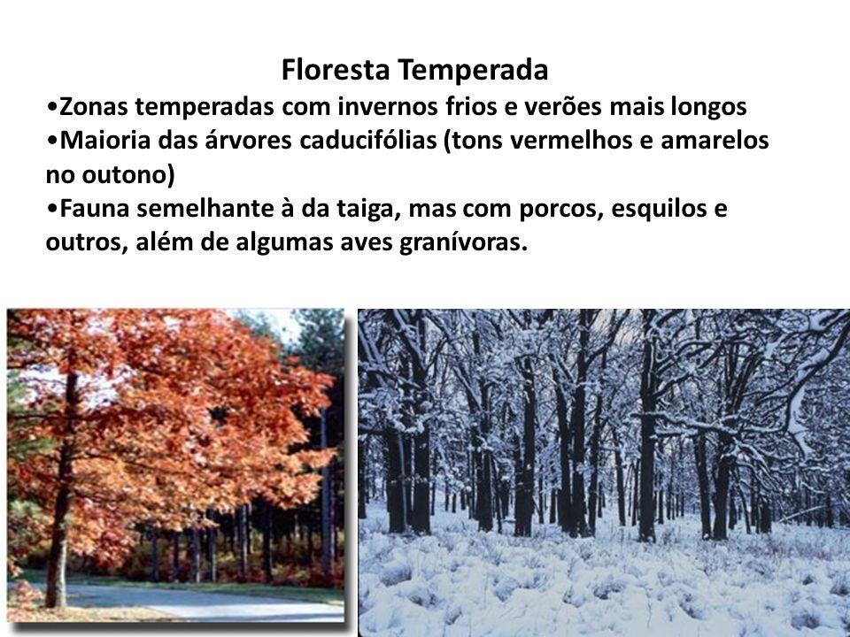 Floresta Temperada Zonas temperadas com invernos frios e verões mais longos Maioria das árvores caducifólias (tons vermelhos e amarelos no outono) Fau