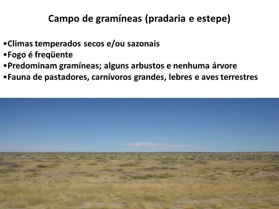 Campo de gramíneas (pradaria e estepe) Climas temperados secos e/ou sazonais Fogo é freqüente Predominam gramíneas; alguns arbustos e nenhuma árvore F