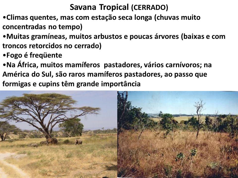 Savana Tropical (CERRADO) Climas quentes, mas com estação seca longa (chuvas muito concentradas no tempo) Muitas gramíneas, muitos arbustos e poucas á