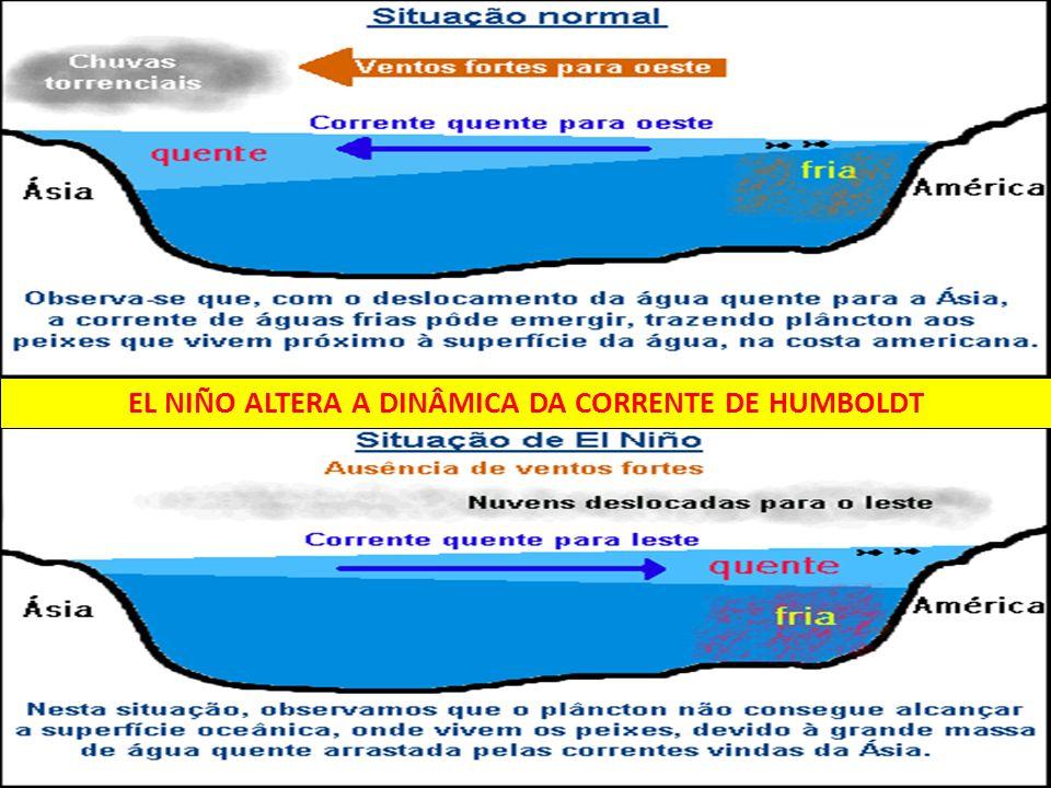 EL NIÑO ALTERA A DINÂMICA DA CORRENTE DE HUMBOLDT