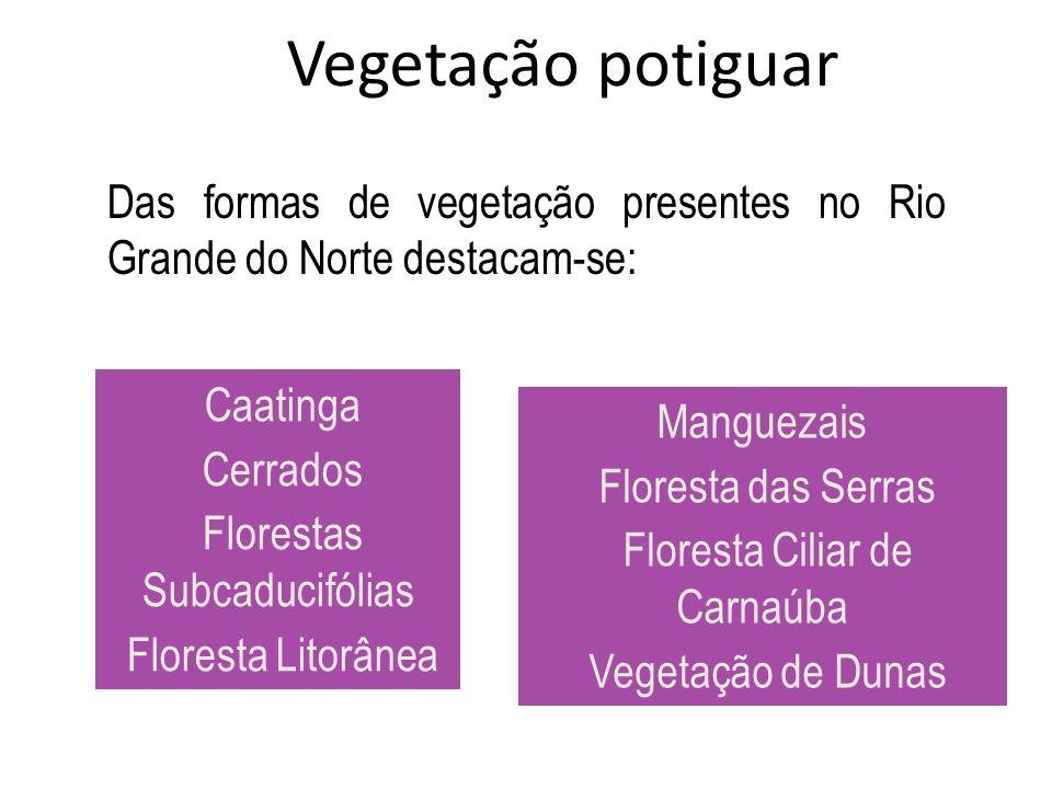 Vegetação potiguar Das formas de vegetação presentes no Rio Grande do Norte destacam-se: Caatinga Cerrados Florestas Subcaducifólias Floresta Litorâne