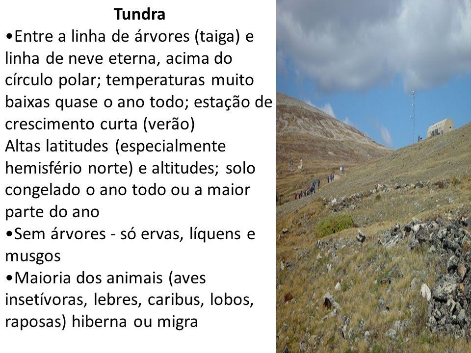 Tundra Entre a linha de árvores (taiga) e linha de neve eterna, acima do círculo polar; temperaturas muito baixas quase o ano todo; estação de crescim
