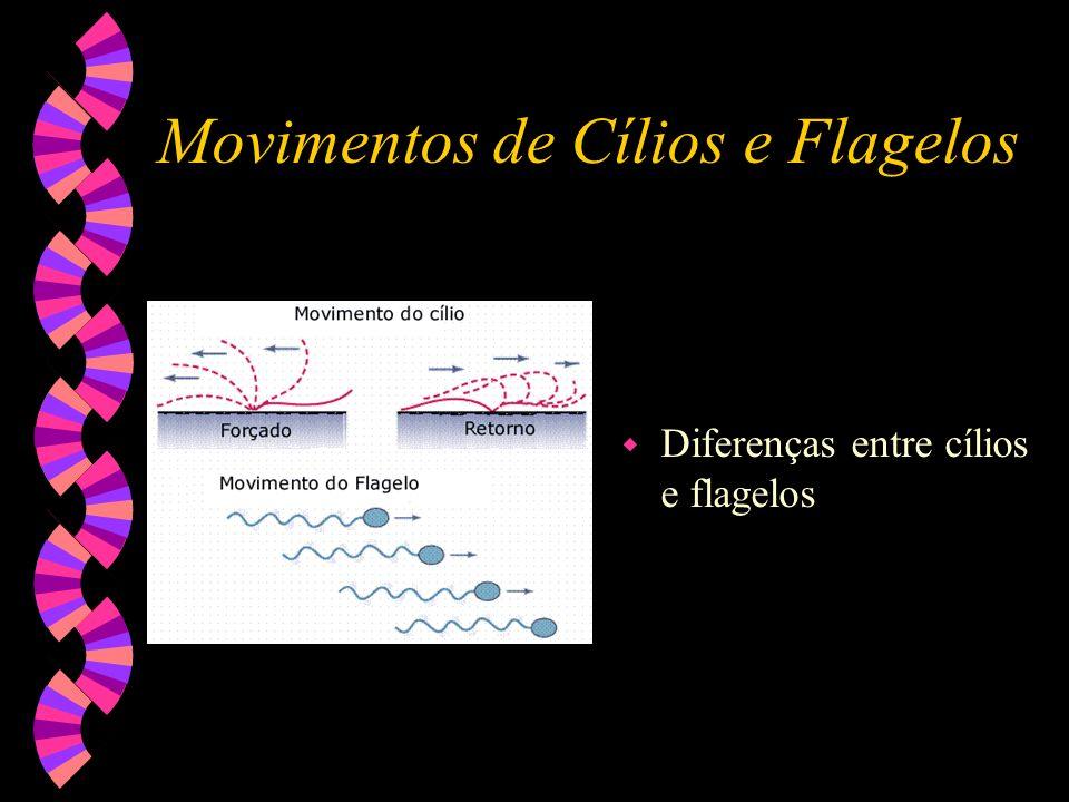 Centríolos w Formação de cílios e flagelos