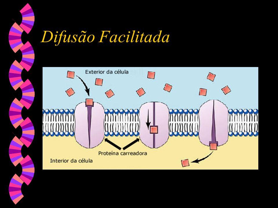 Difusão simples Transportes através da membrana