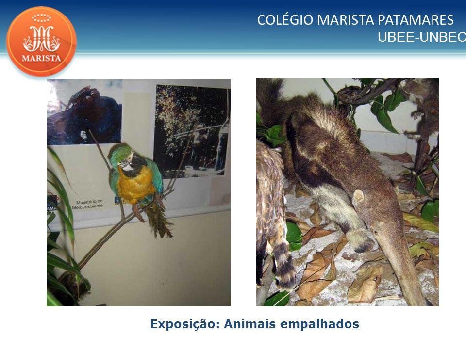 UBEE-UNBEC COLÉGIO MARISTA PATAMARES Exposição: Animais empalhados