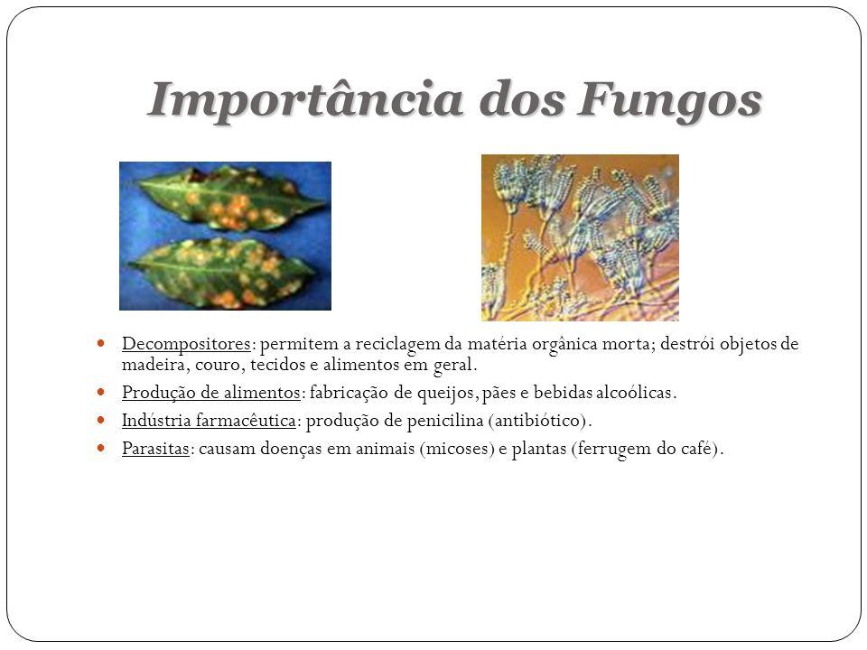 Importância dos Fungos Decompositores: permitem a reciclagem da matéria orgânica morta; destrói objetos de madeira, couro, tecidos e alimentos em gera