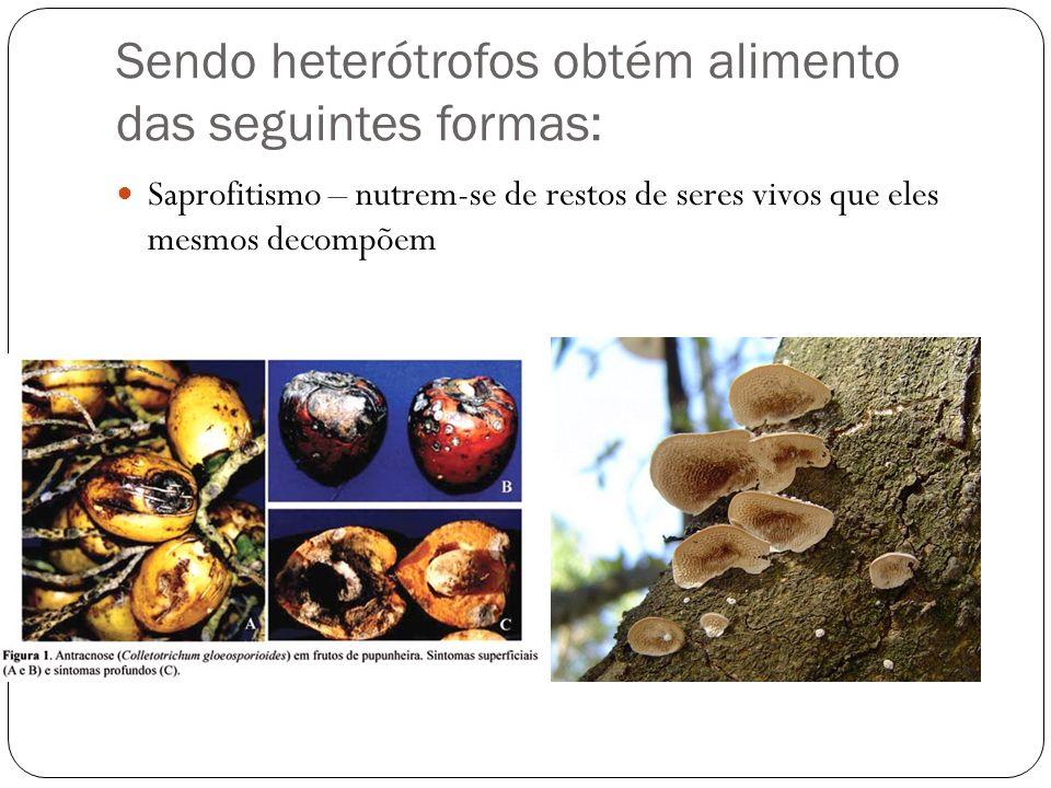 Sendo heterótrofos obtém alimento das seguintes formas: Saprofitismo – nutrem-se de restos de seres vivos que eles mesmos decompõem