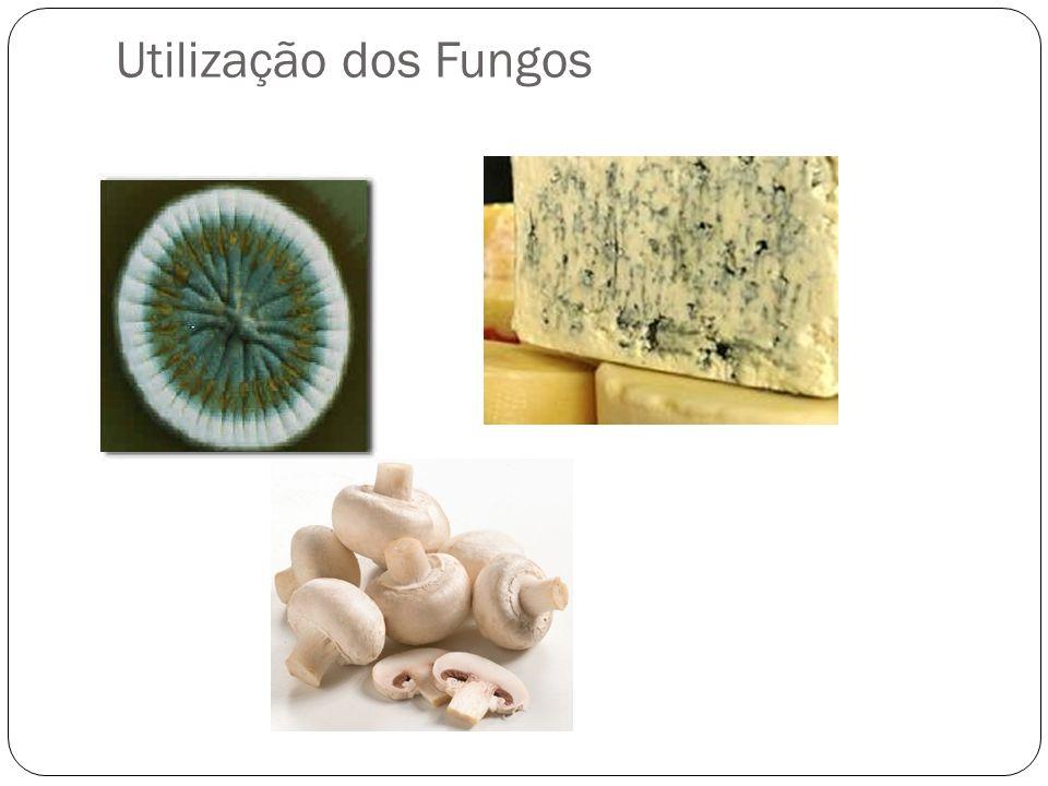 Utilização dos Fungos