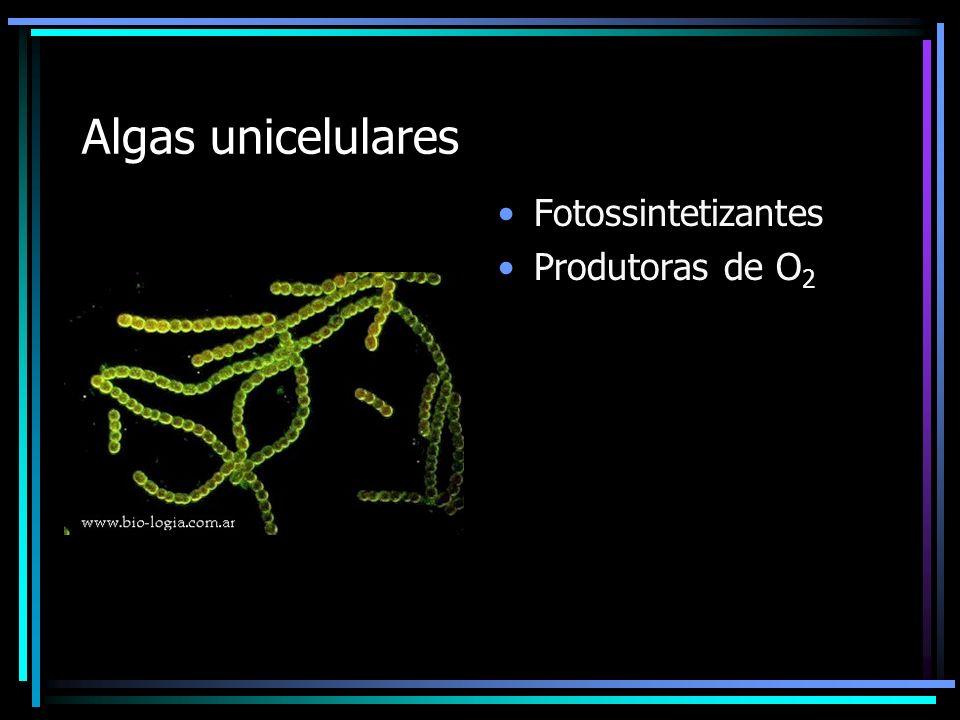 Algas unicelulares Fotossintetizantes Produtoras de O 2