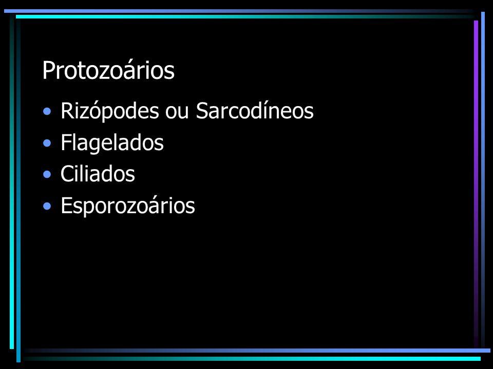 Protozoários Rizópodes ou Sarcodíneos Flagelados Ciliados Esporozoários