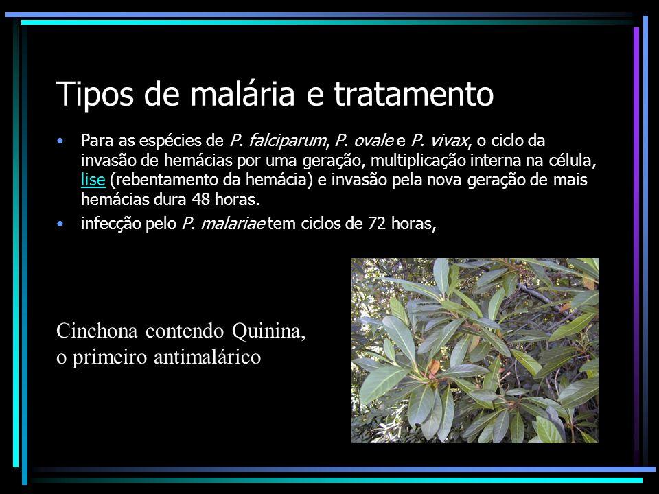 Tipos de malária e tratamento Para as espécies de P. falciparum, P. ovale e P. vivax, o ciclo da invasão de hemácias por uma geração, multiplicação in