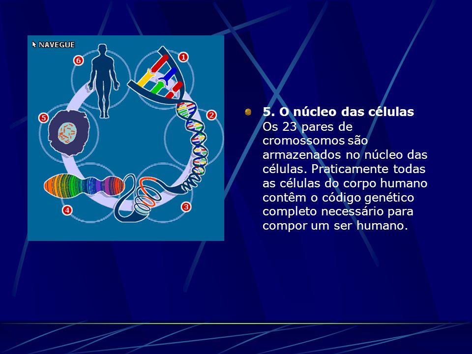 5. O núcleo das células Os 23 pares de cromossomos são armazenados no núcleo das células. Praticamente todas as células do corpo humano contêm o códig